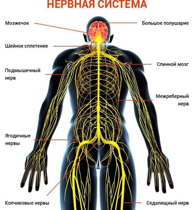 ВСД и шейный остеохондроз: почему связаны и как их лечить