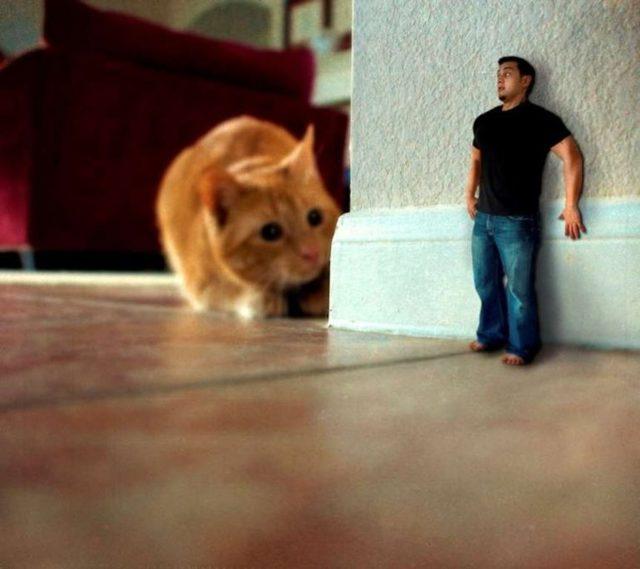 Айлурофобия (боязнь кошек): симптомы и методы лечения