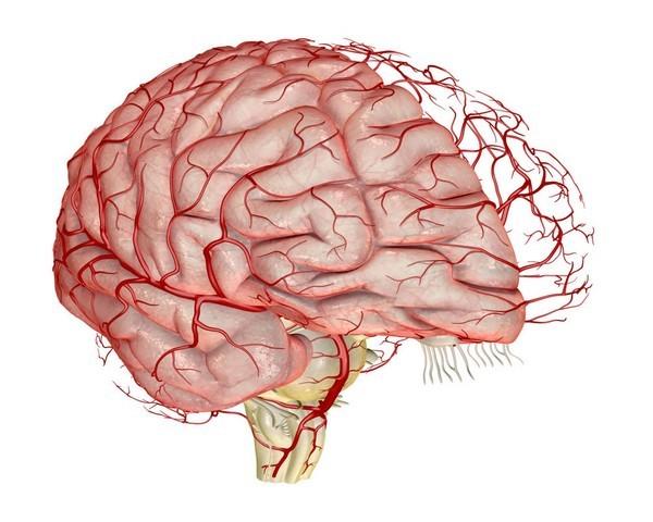 Как укрепить сосуды головного мозга при ВСД: советы врача